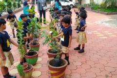 Pre-primary Plantation
